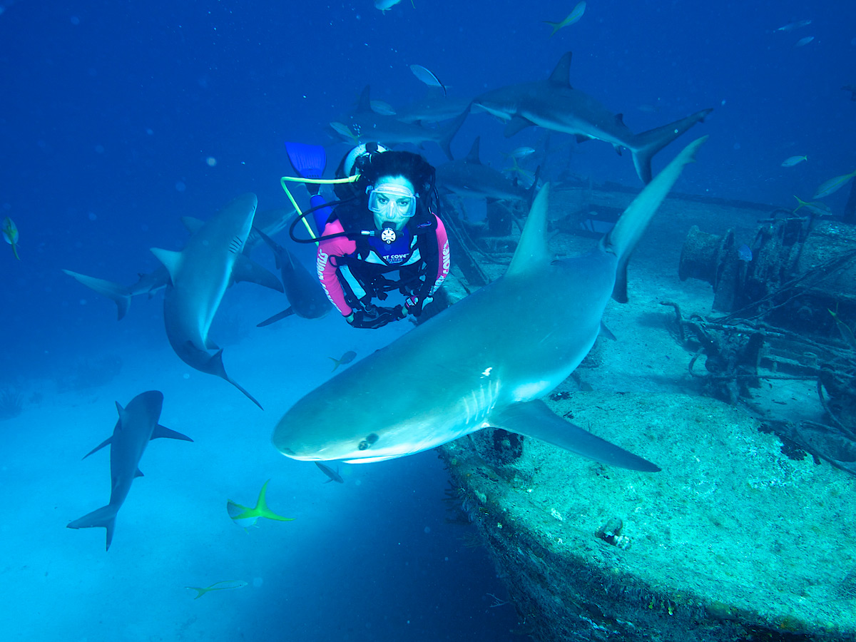 Bahamas dive with sharks