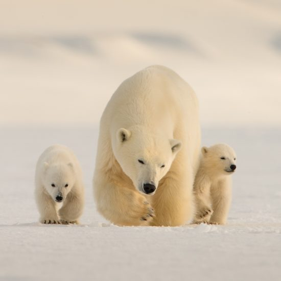 Svalbard – the polar kingdom