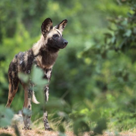 Zambia's wildlife photography