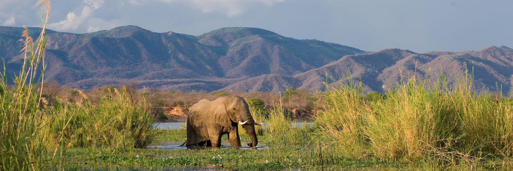 Africa's savannah to sea